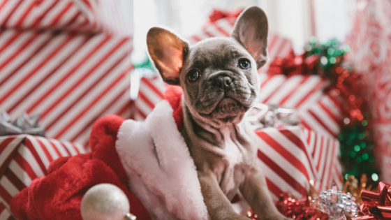 Social Media Tips for Holiday 2020
